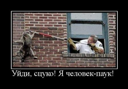 Сборник демотиваторов с котами (октябрь 2011)
