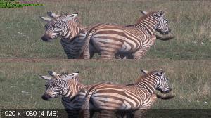Сафари -Африка- в 3Д / Safari -Africa- 3D