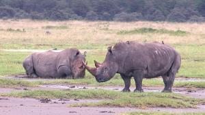 Сафари -Африка / Safari -Africa (2011) BDRip 720p