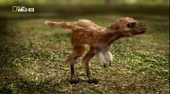 National Geographic: Знакомьтесь - динозавры / Make Me A Dino (2010) HDTVRip