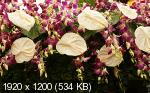 HQ FLOWERS - ����� - [�� 1280�800 �� 3840�1200]