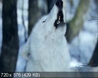 Выжить с волками / Survivre avec les loups (2007) DVD9 + DVD5 + DVDRip 1400/700 Mb
