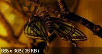 Бабочка / Le Papillon (2002) DVDRip