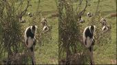 Приключения в сафари парке 3Д [Сезон 01, Серии 01-10 из 10] / Safari Park Adventure 3D [s01, e01-10 of 10] Горизонтальная анаморфная